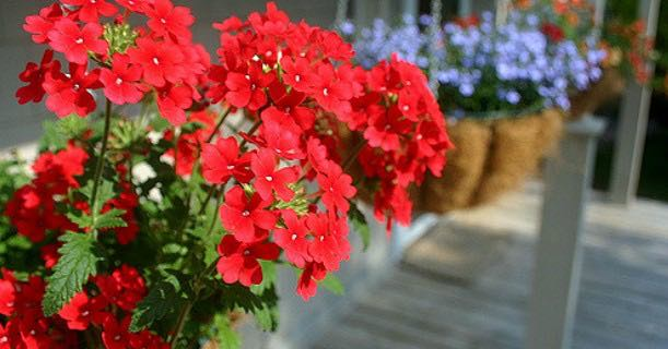 Hanging Flower Baskets At Lowes : Score hanging flower baskets just each at lowe s
