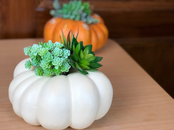 White Succulent Pumpkin Centerpiece