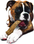 Nylabone Healthy Edibles Wild Dog Treats | Dog Treats Made in The USA Only $8.44 (REG $13.99)