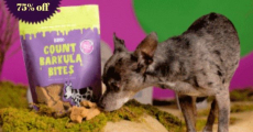 Spoil Your Pup With Up To 75% Off Bark Dog Treats!