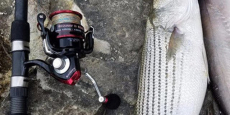 2018 KastKing Sharky II 1500 Spinning Reel ONLY $28.03 Shipped!
