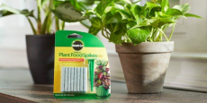 Miracle-Gro Indoor Plant Food 48-Count Spikes Just $1.57!