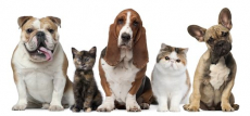 New Pet Product Printable Coupons!