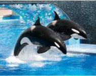 FREE Admission for Military and Family to Sea World, Busch Gardens, Adventure Island and More!!!