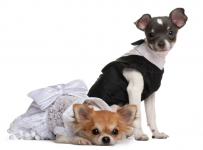 Best Dog Clothes For New Owners in 2020