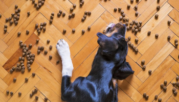 6 Benefits of Organic Food for Your Dog