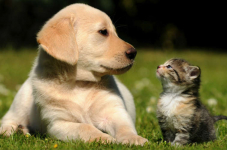 Save Over $44.00 Off Products For Your Pets!